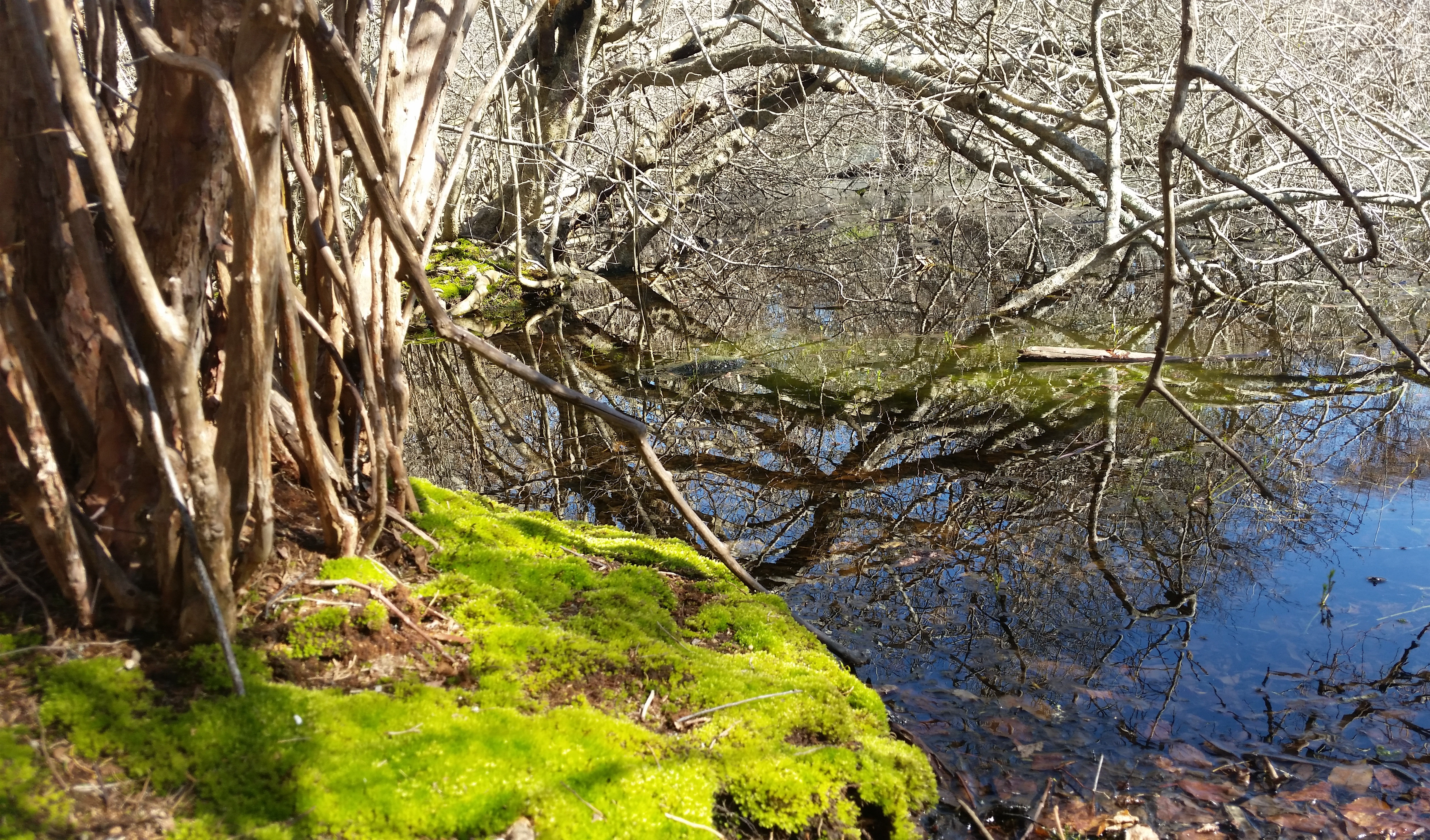 One of Woods Cove's vernal pools