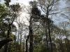 Pine/Oak skyline