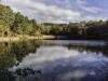 meadow-bog-pond-2