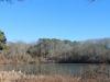 meadow-bog-pond-3