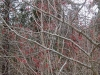 5profusion-of-winter-berry