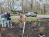 Starting to plant native shrubs at middle school