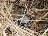 hatchling release 8-29-15