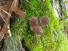 15Mushrooms-and-Moss