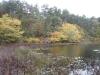 edge-of-twinings-pond