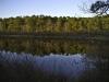 twinings-pond