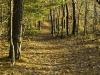 twinings-trail