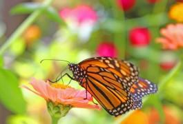2015,9,26- Monarch2