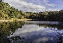 Meadow Bog Pond 2