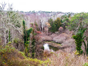 Mill Pond Valley 300x250