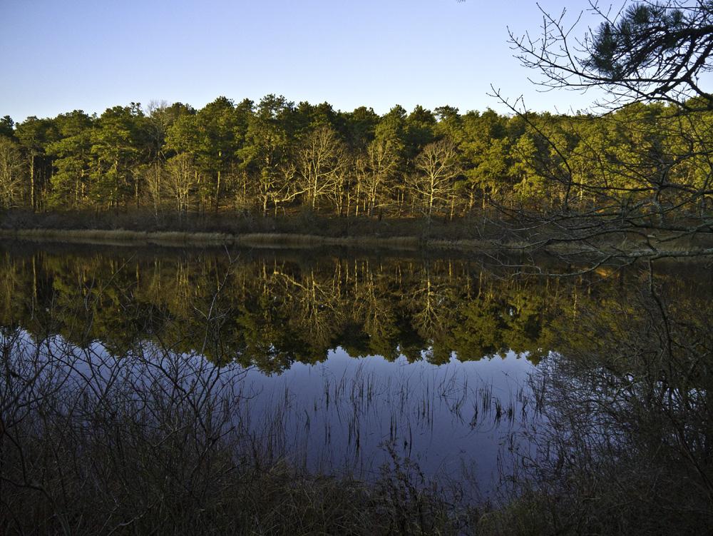 Twinings Pond