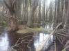 Hosea's Swamp