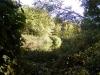 reubens-pond-2