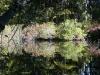 reubens-pond1