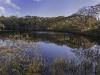 meadow-bog-pond