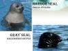 seals-640-x-480-4