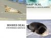 seals-640-x-480-5