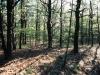 pine-oak-woodland