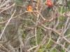 11bittersweet-berries